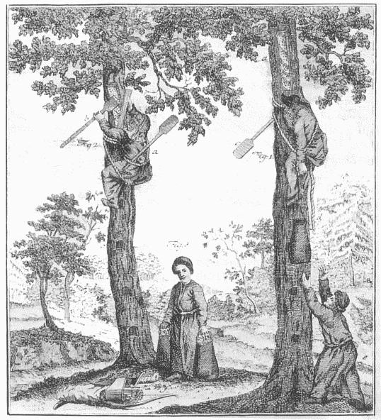 Zeidler im Wald